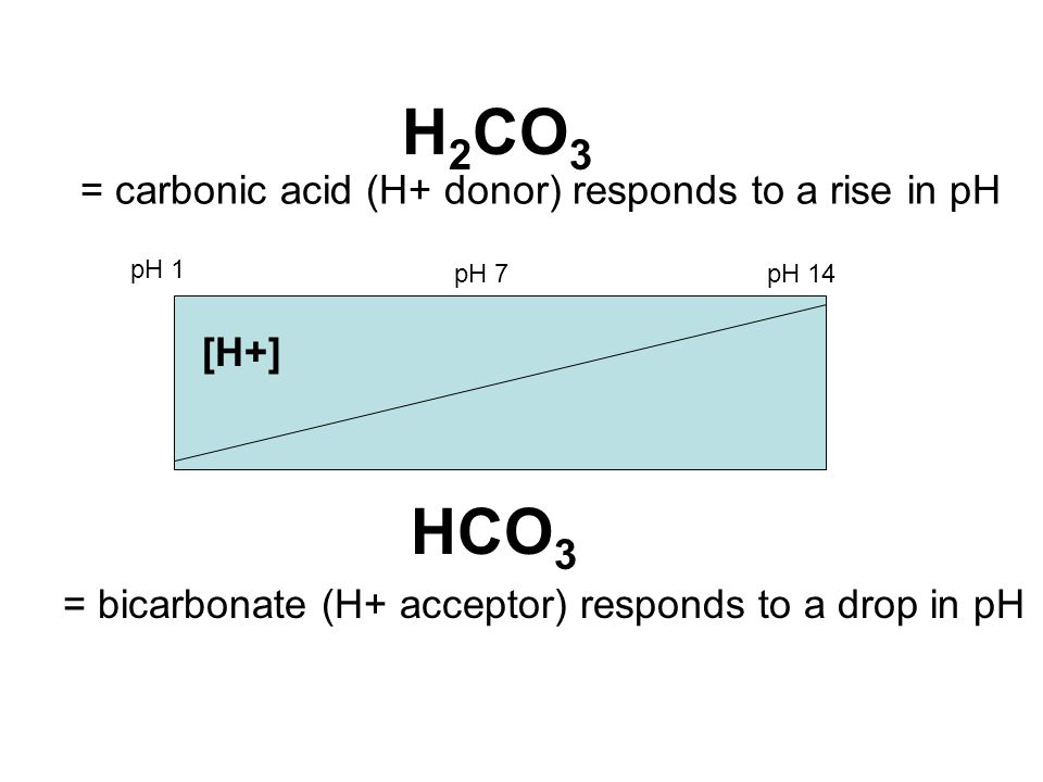H2CO3 HCO3 = carbonic acid (H+ donor) responds to a rise in pH [H+]